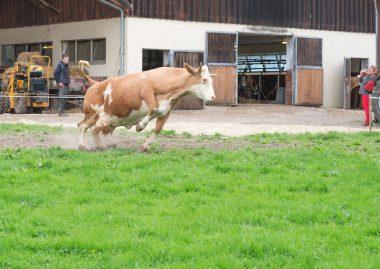 Andechser Bio Molkerei Wir lassen die Kuh raus 12