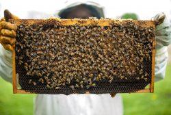 Pasing Arcaden Honig eigene Imkerei Pexels -1406954