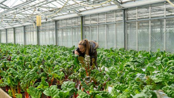 Gärtnerei Böck Neufarn Gemüse bestellen