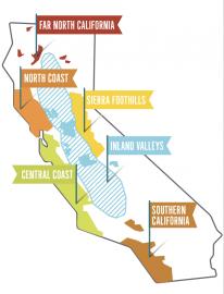 California Wein kalifornische Weine Hawesko Weintest-12