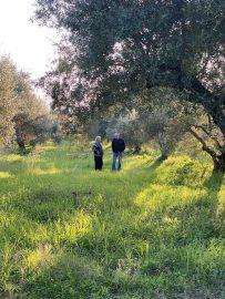 Der Dorfladen hochwertige Lebensmittel Griechenland online Jordanis und Gregorius