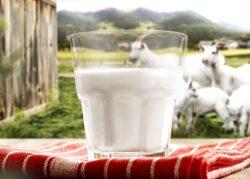 Marasia Ziegenmilcheis Muenchen kaufen 2
