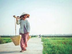 Vietnamesischer Kaffee Kennzeichen und Qualitaet